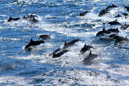 RED ALERT: UPDATE ON THE TAIJI DOLPHIN HUNT