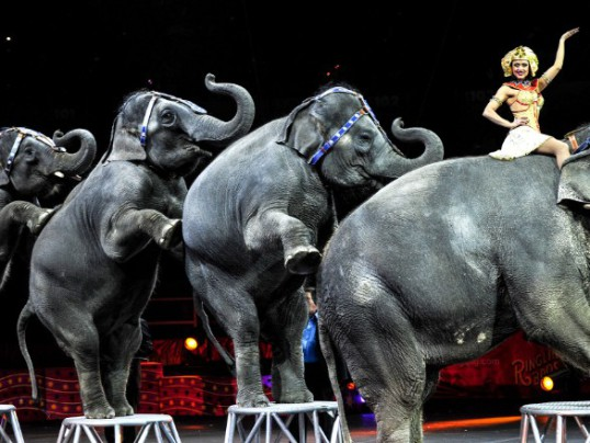 RINGLING BROS. TO PHASE OUT ELEPHANTS BY MAY