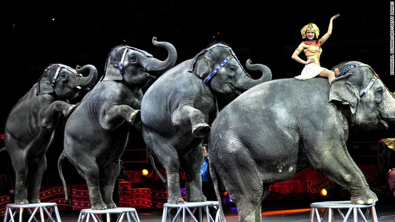 Ringling Bros. elephants