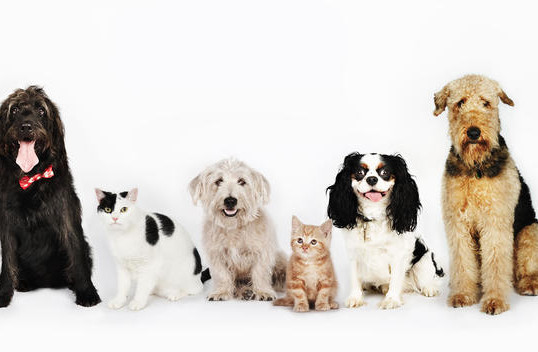 CLEAR THE SHELTERS DAY RETURNS IN 2016