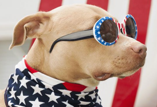 FOURTH OF JULY SAFETY TIPS FOR PETS