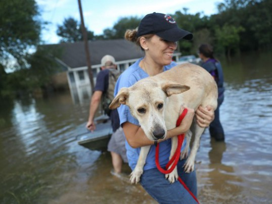 HELP PEOPLE + ANIMALS RAVAGED BY THE LA FLOODS