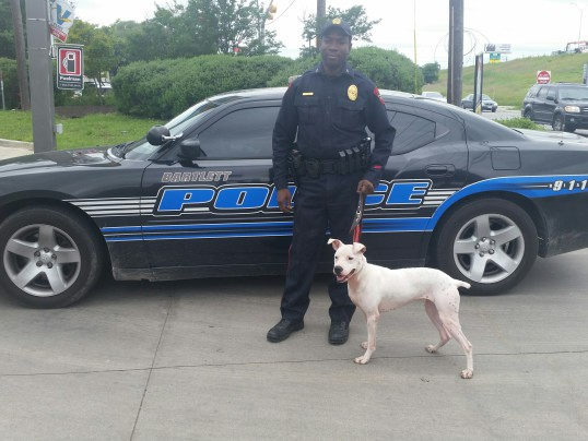 RESCUED PIT BULLS TRAINED TO BE K9′S