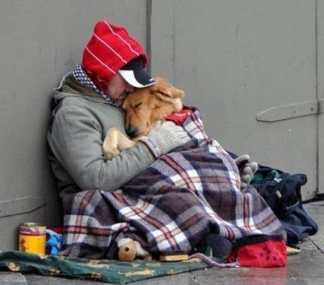 SHELTER HELPS HOMELESS PETS + PEOPLE