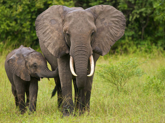CHINA BANS THE IVORY TRADE