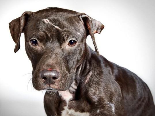 shelter dog 1