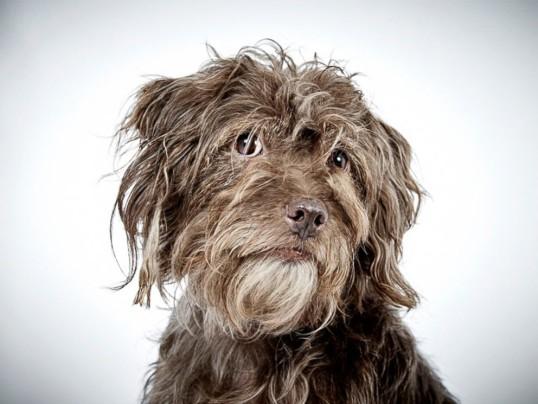 shelter dog 4