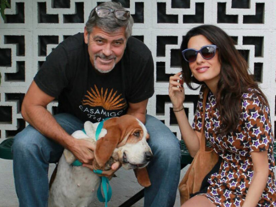 GEORGE AND AMAL CLOONEY DONATE BIG TO DOG RESCUE