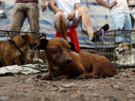 CHINA BANS SALE OF DOG MEAT AT YULIN FESTIVAL