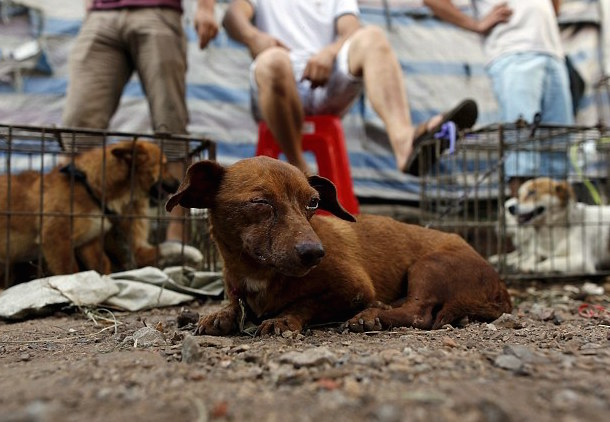 yulin dog meat festival 1