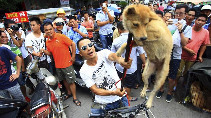 yulin dog meat festival 2
