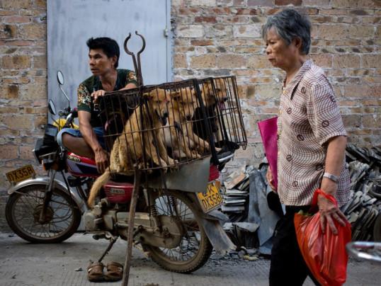 Dogs for sale in Yulin in 2016