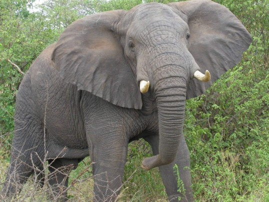 TRUMP ADMIN REVERSES BAN ON ELEPHANT TROPHIES