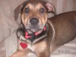 Dallas as a puppy in 2006
