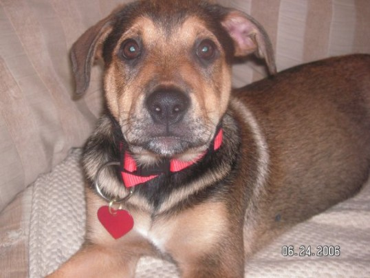 Dallas as a puppy in 2006