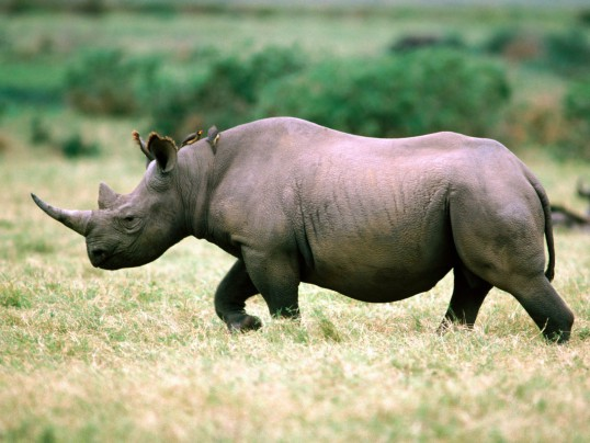 SPIN TO HELP E-RACE EXTINCTION FOR RHINOS, ELEPHANTS