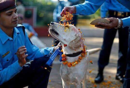 INSIDE NEPAL'S BEAUTIFUL FESTIVAL THAT HONORS DOGS