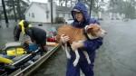 Hurricane Florence Animals