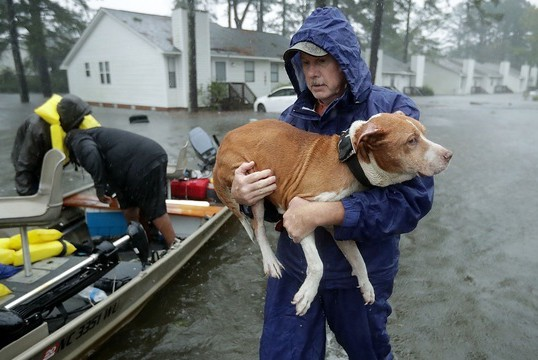 HOW TO HELP HURRICANE FLORENCE ANIMALS