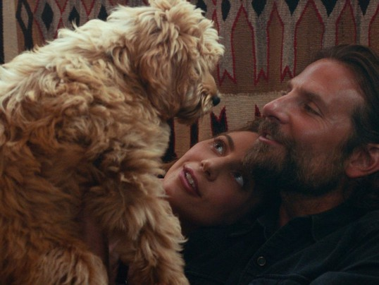 BRADLEY COOPER'S DOG IN A STAR IS BORN