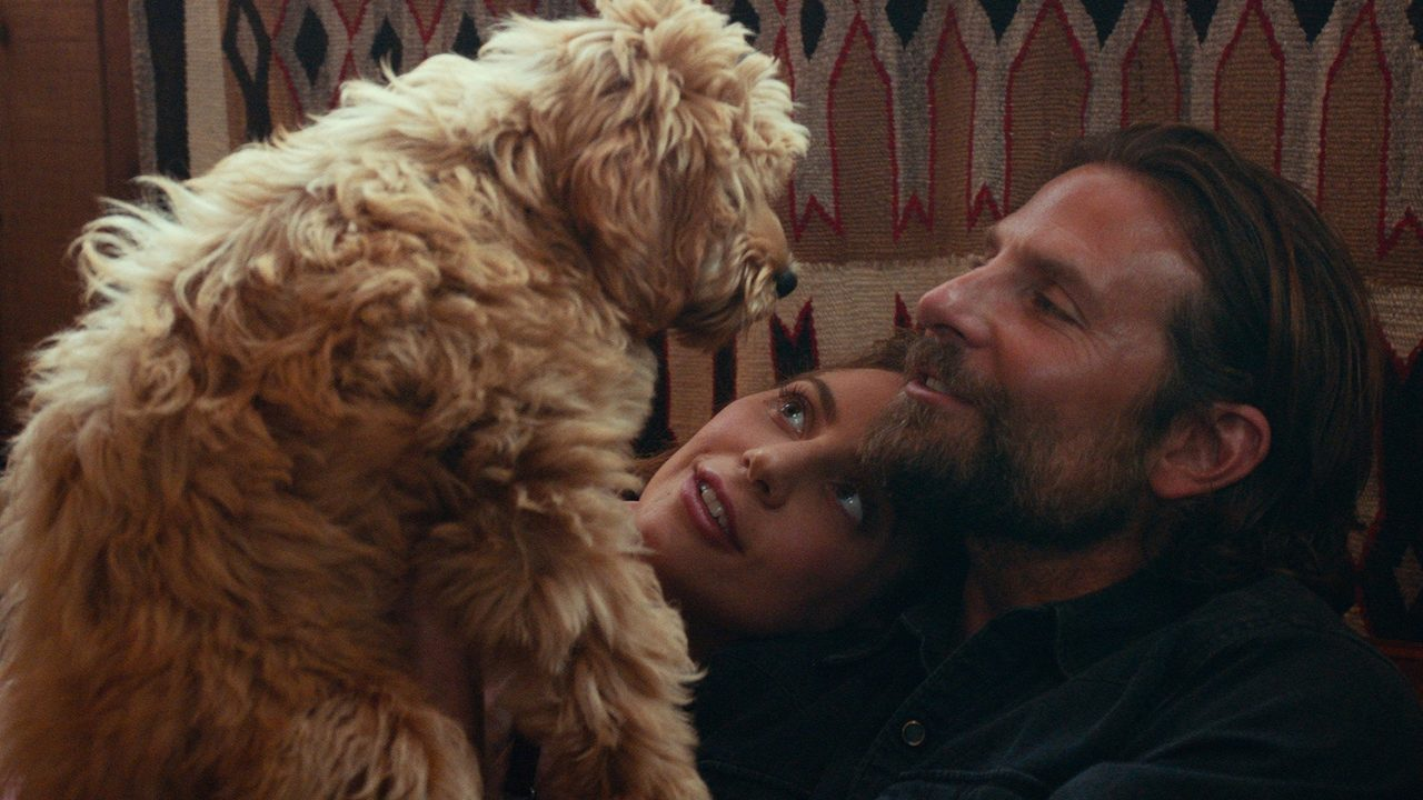 A Star is Born Charlie dog.jpg_12776032_ver1.0_1280_720