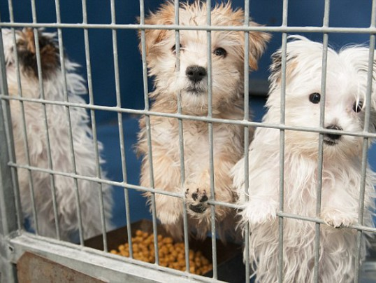 CALIFORNIA PET STORES CAN ONLY SELL RESCUED ANIMALS