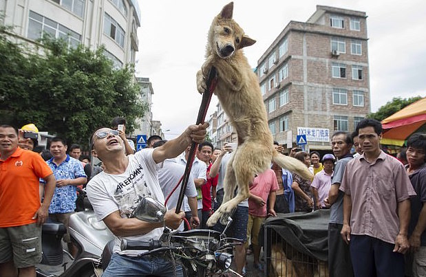 A Dog Tortured at the Yulin Dog Meat Festival