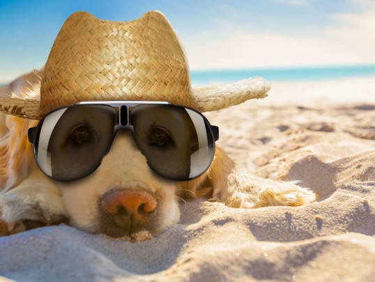 PROTECT YOUR PETS FROM HEAT STROKE