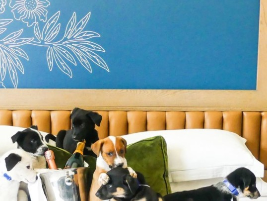 PUPPIES AND PROSECCO DELIVERED TO YOUR HOTEL ROOM
